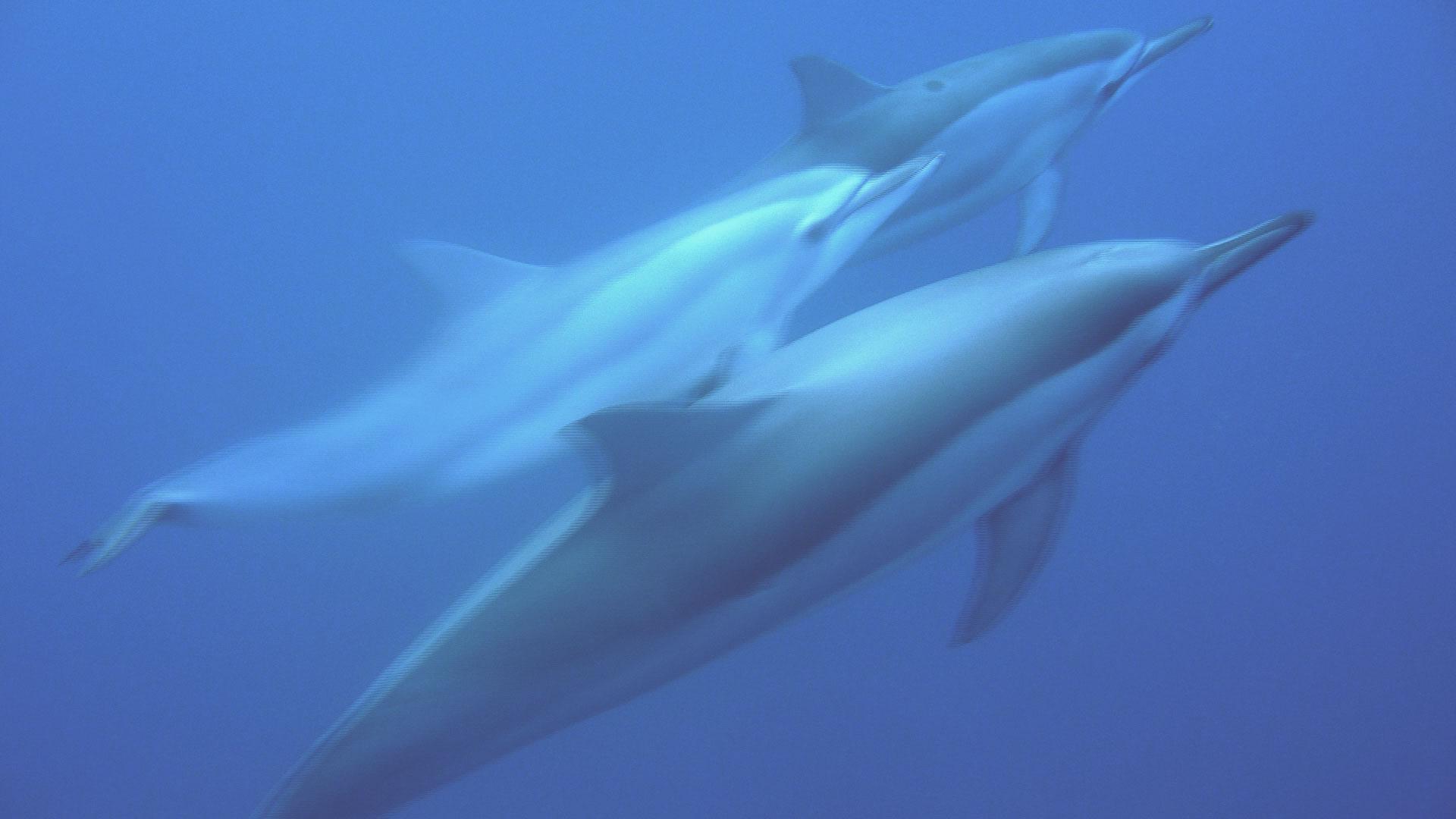 On a testé: Nager avec les dauphins à l'île Maurice