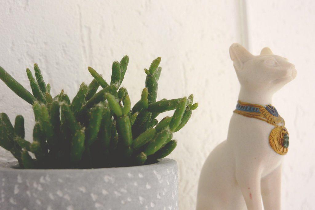 Succulente et chat d'Egypte