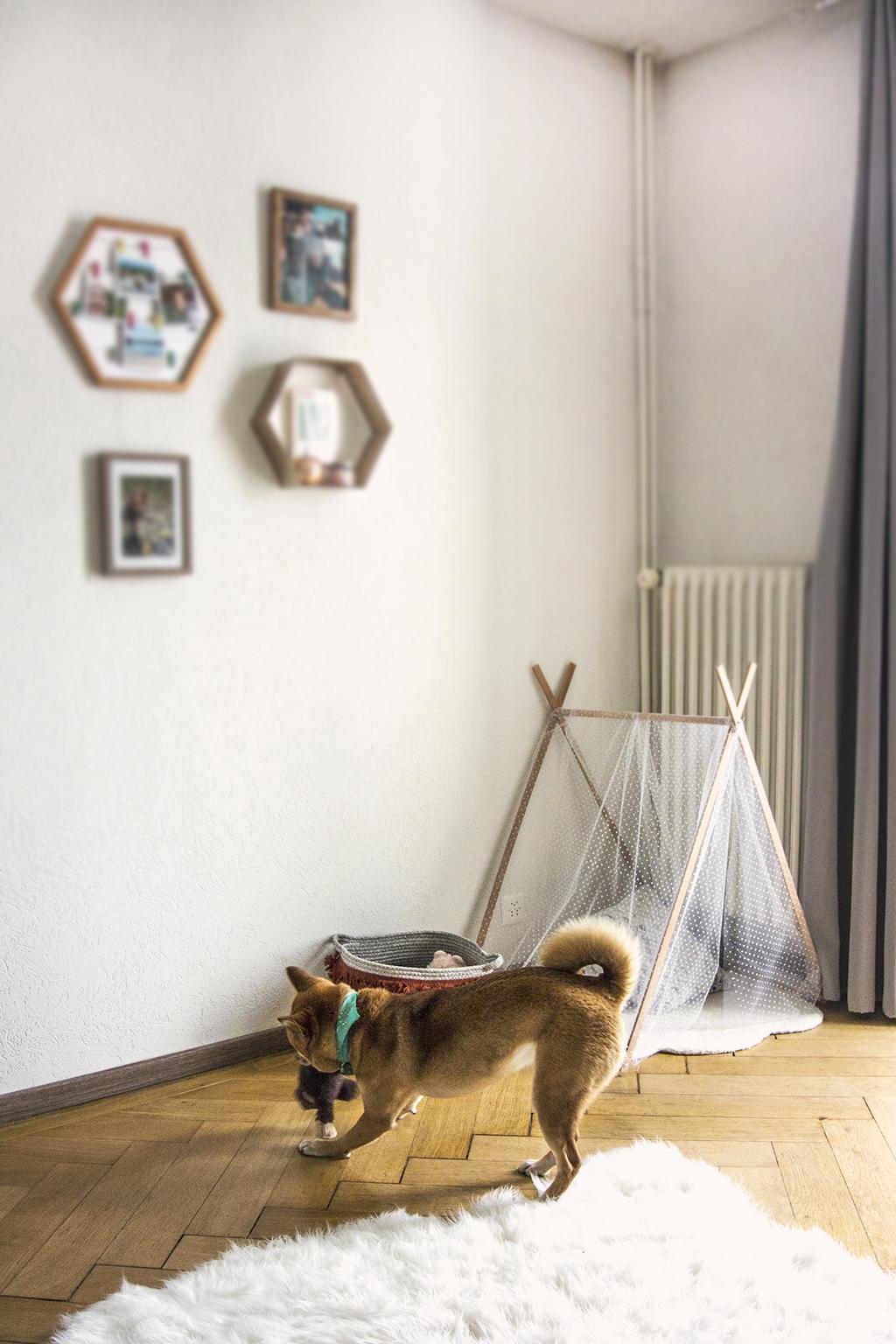 Panier à jouets pour chien