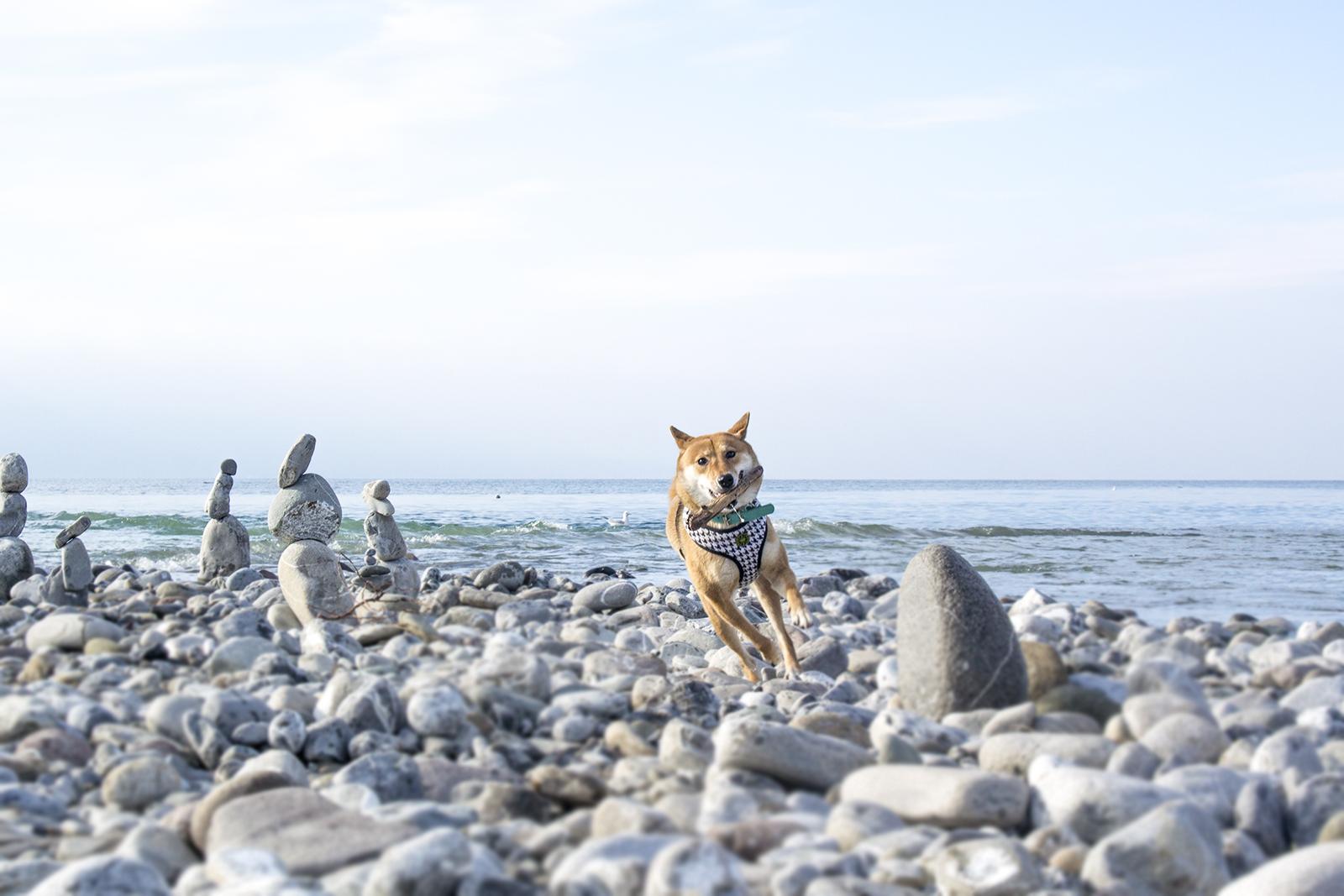 Partir à l'étranger avec son chien ? Bien préparer son voyage en 10 points