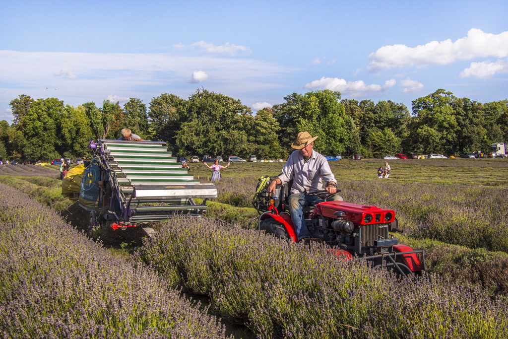 Fermiers Mayfield Lavender Farm