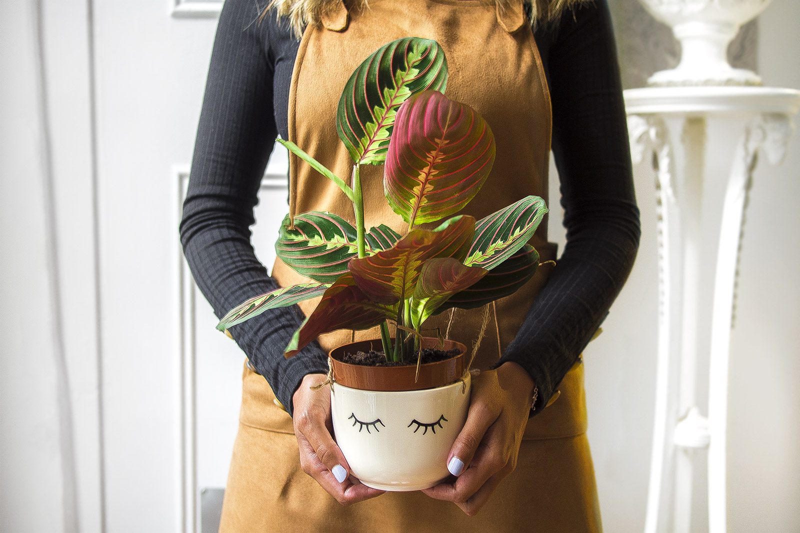 Mes plantes: maranta