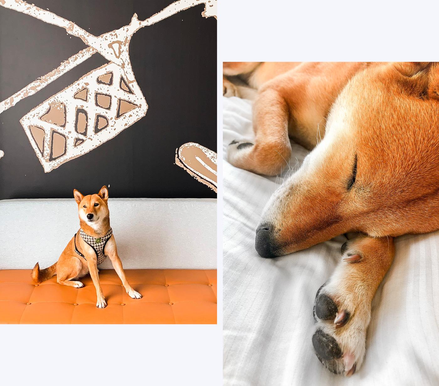 Hotel avec un chien aux pays-bas